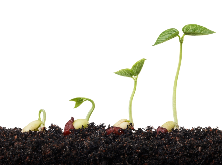 seeds sprouting in soil